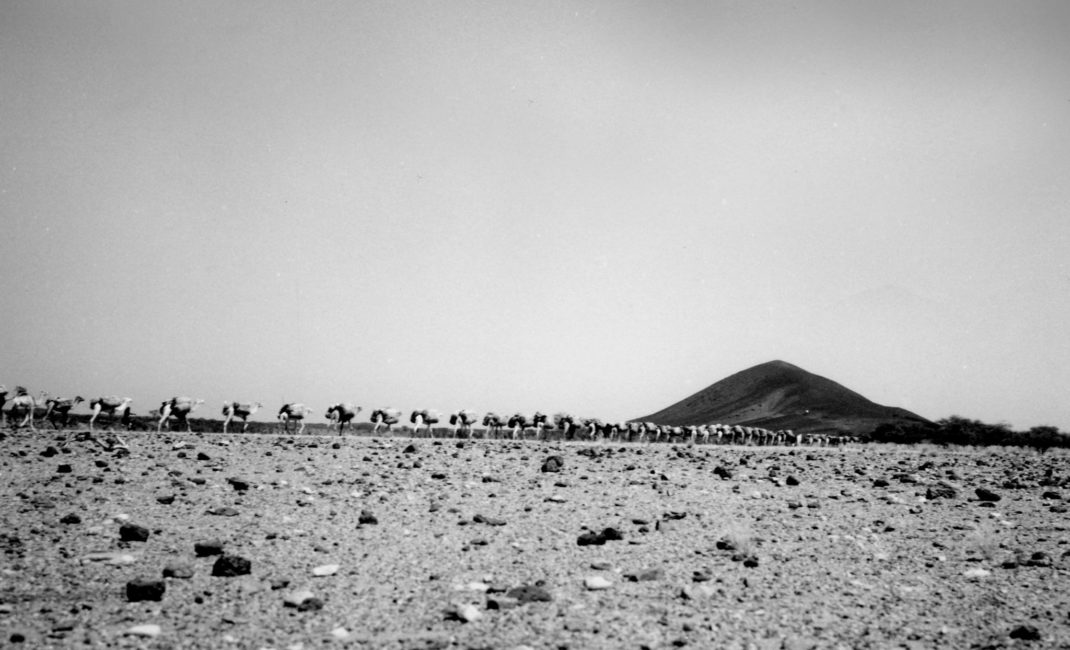 Caravane de dromadaires au Niger @Bernus Estate