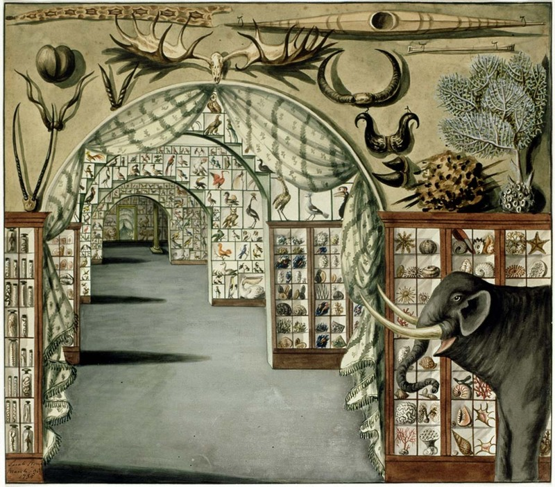 Interior of Lever's Museum by Sarah Stone, via Mitchell Library, State Library of New South Wales.