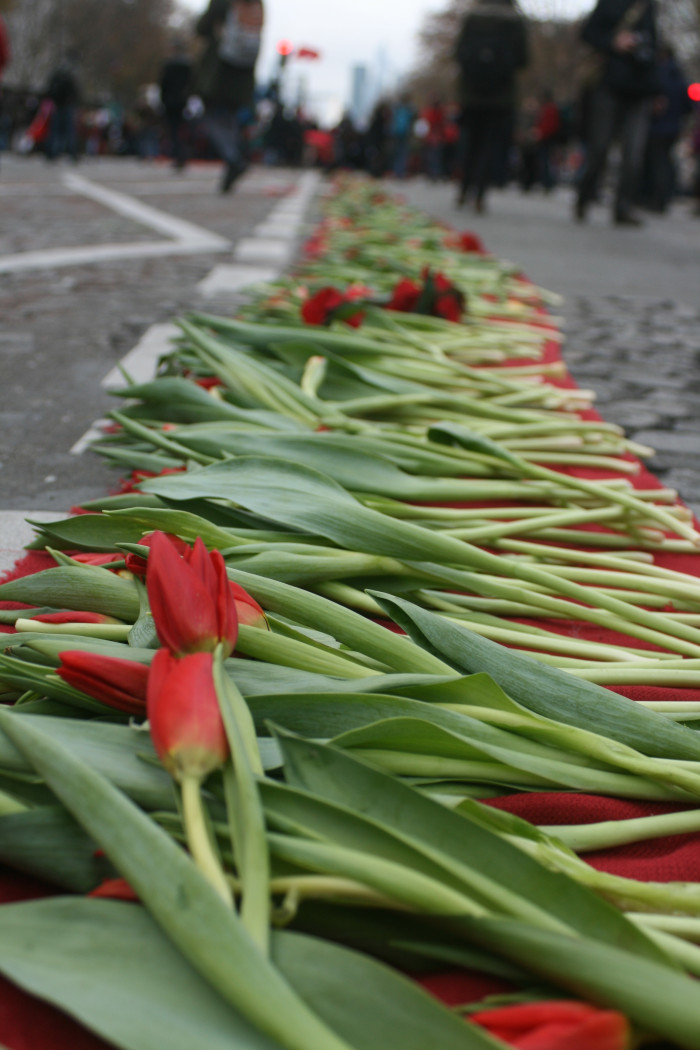 Tulips laid to commemorate victims of climate change