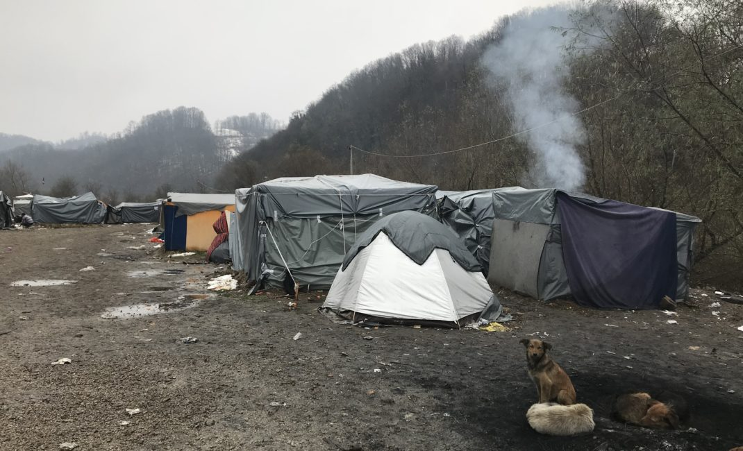 Dogs huddle in front of tents in a makeshift camp with a fire burning.