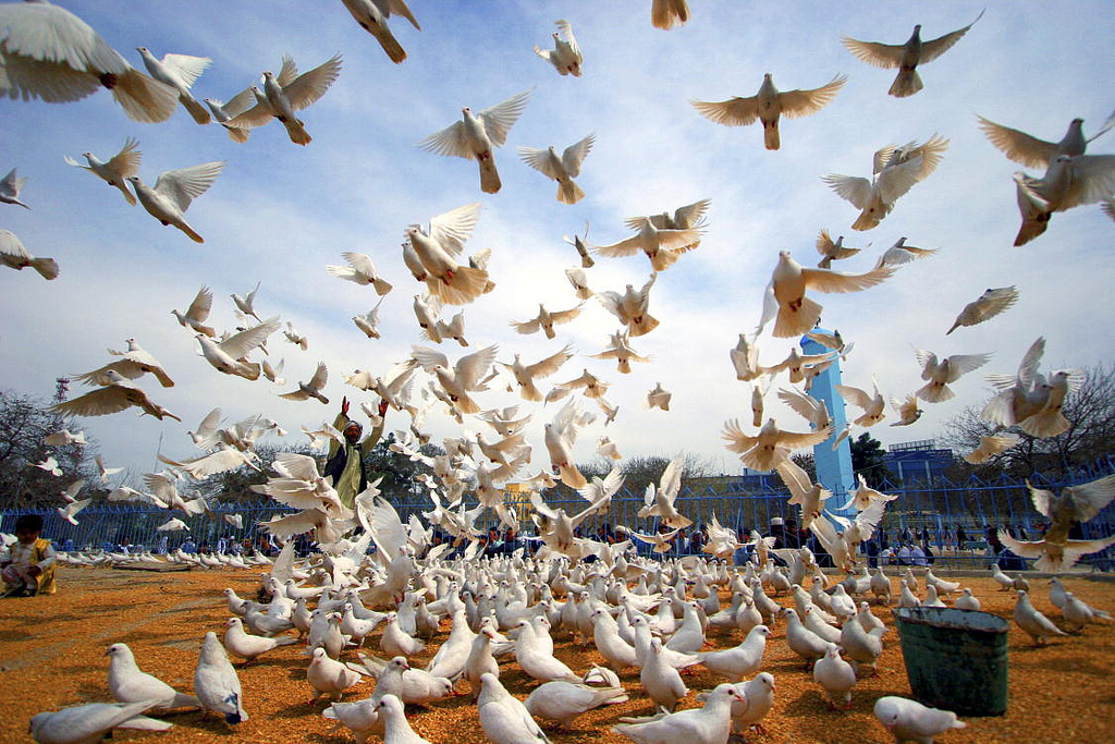 Scores of white peace doves sit on the red ground while others are taking to the blue sky as a man raises his arms in the background at the historic Hazrat-i-Ali mosque, in the city of Mazar-i-Sharif, Afghanistan.