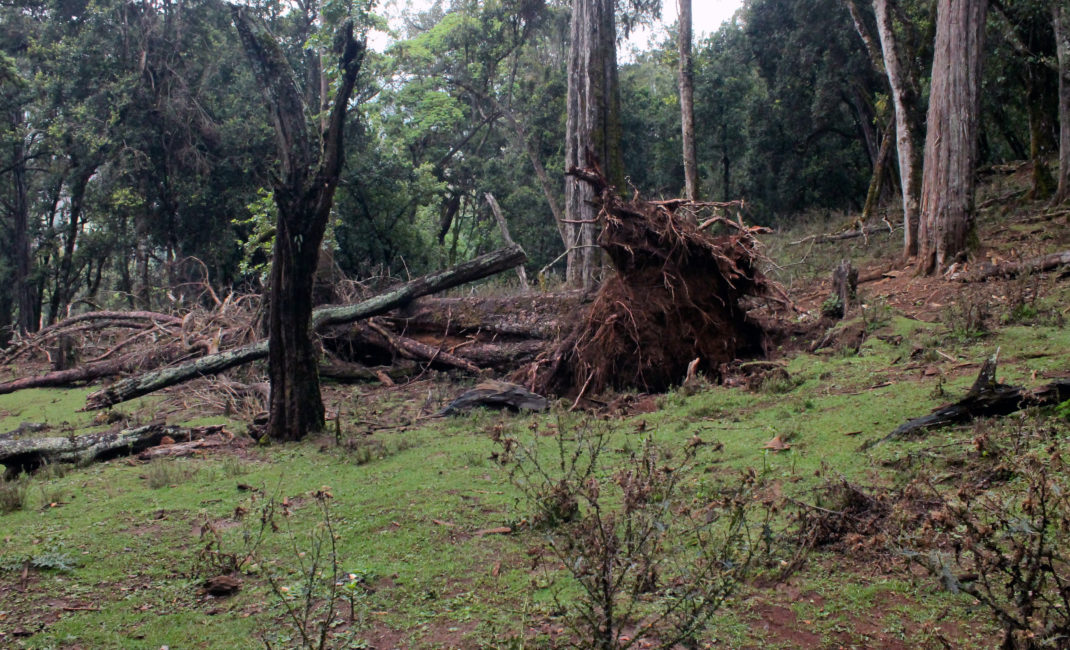 Illegal logging at Embobout Forest / Image: Pablo Orosa