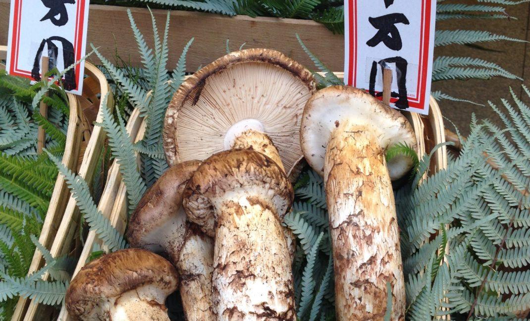 A picture of matsutake mushrooms