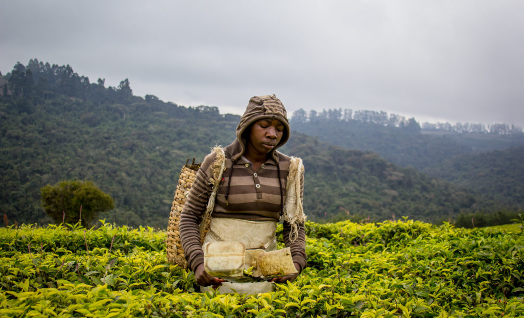 Tanzania Tea pickers photographed by CIFOR - for Rainforest Alliance Unilever story