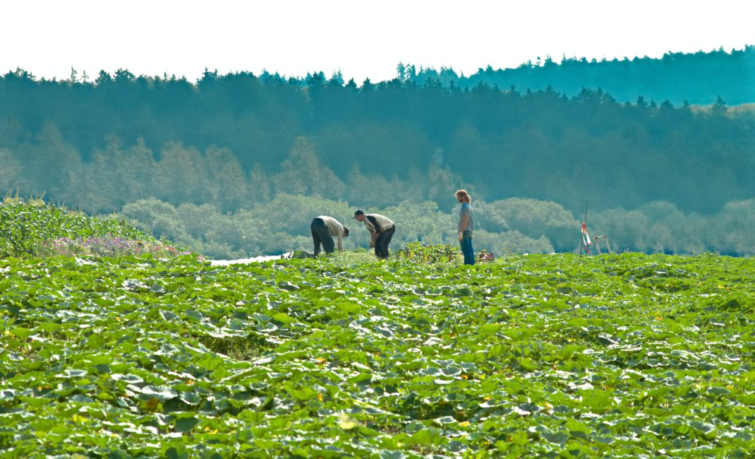 A wide, green field with three figures on the horizon tending to edible crops